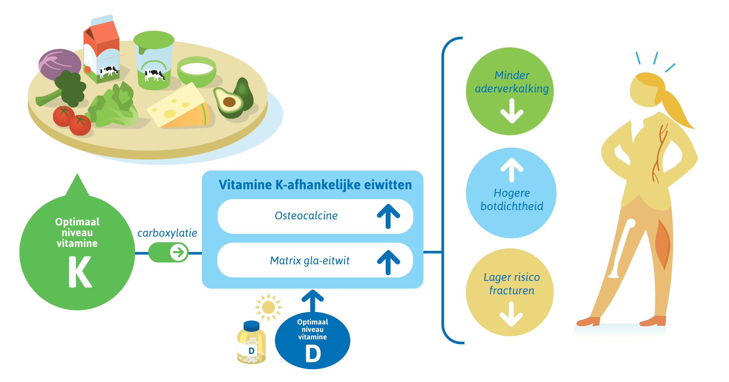 Versimpeld overzicht synergie vitamine D en K